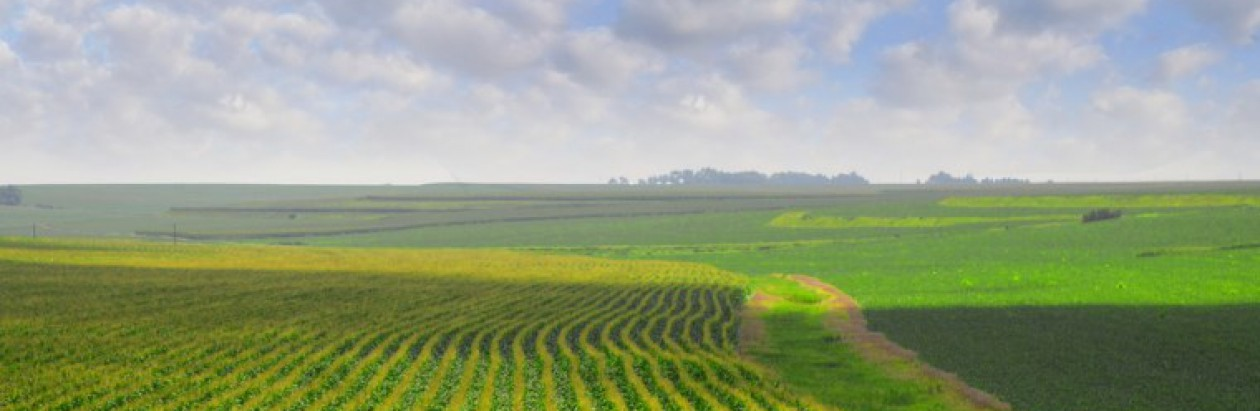 cropped-nebraska_cornfields1.jpg